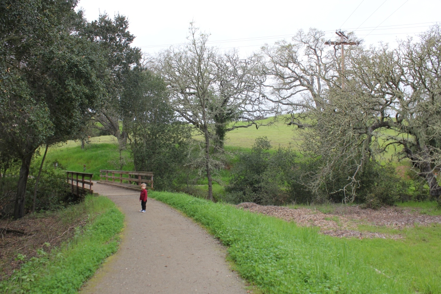 Path around Arastradero Lake