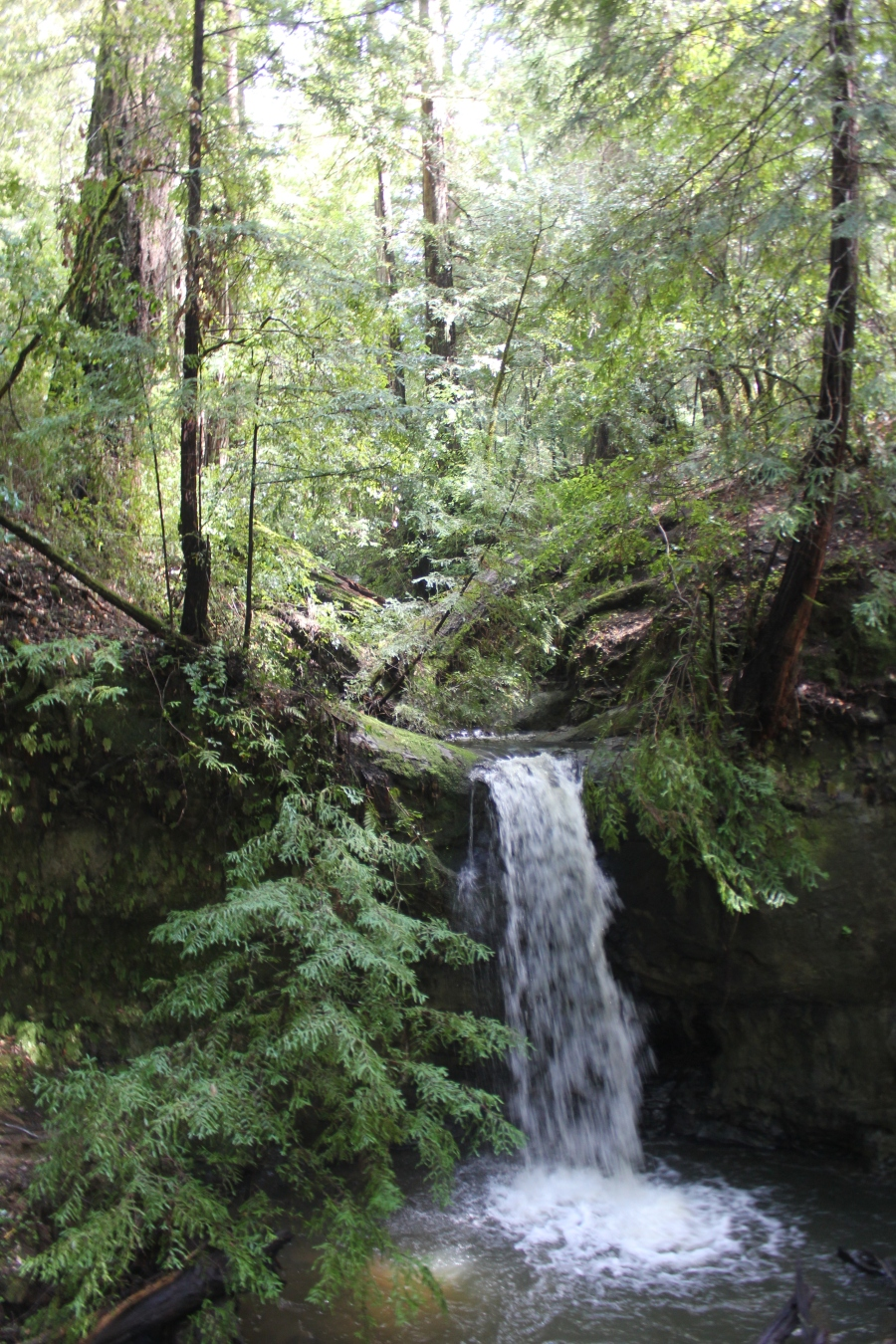 Sempervirens Falls from platform