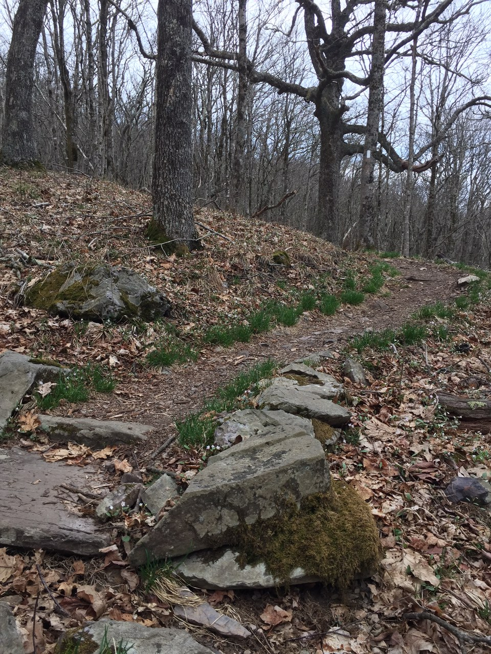 Appalachian Trail through the woods