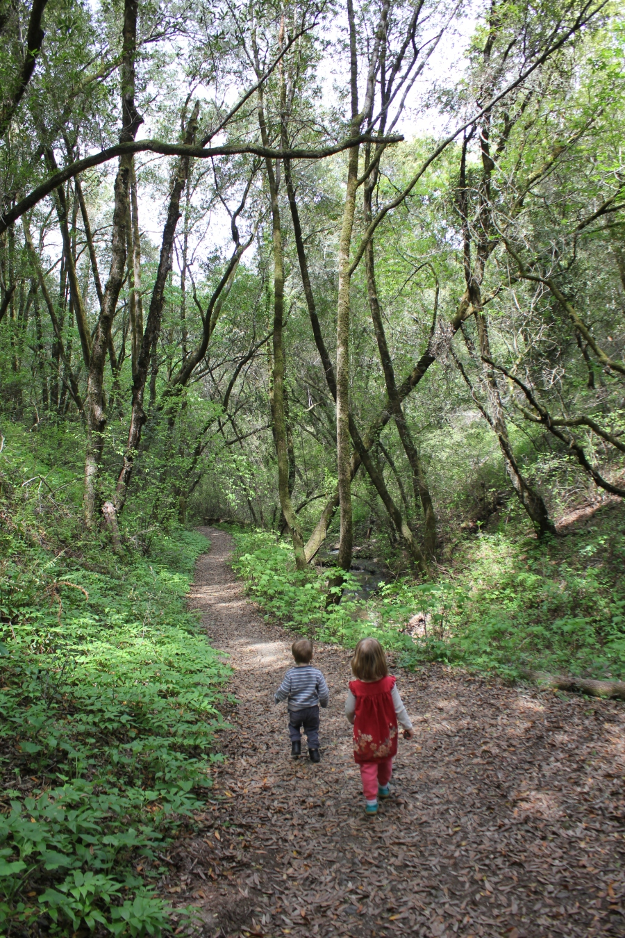 Kids on the Creek Trail