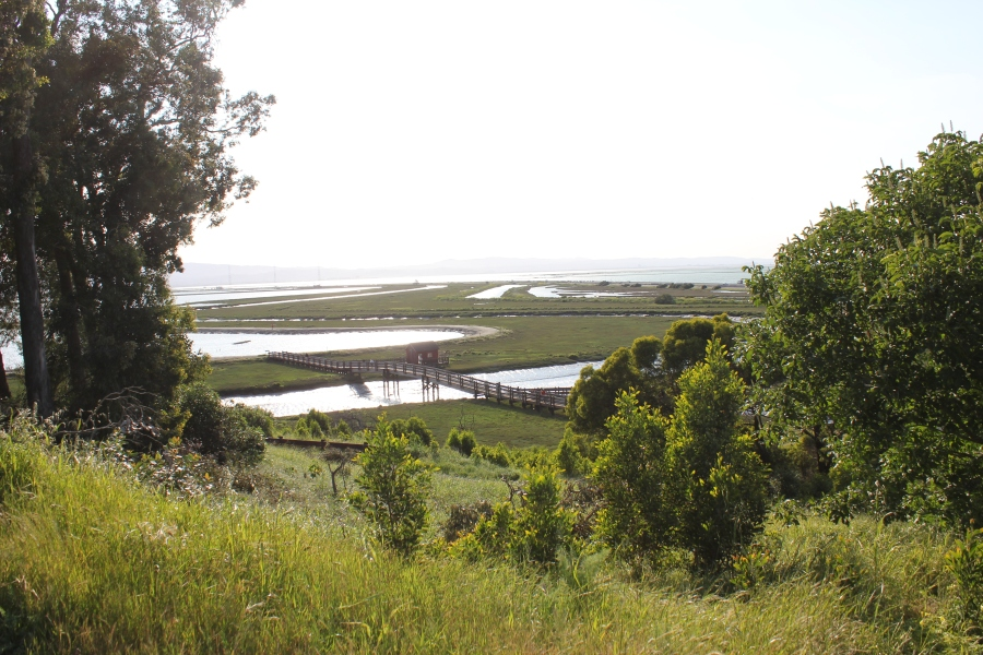 View of the Bay from Don Edwards