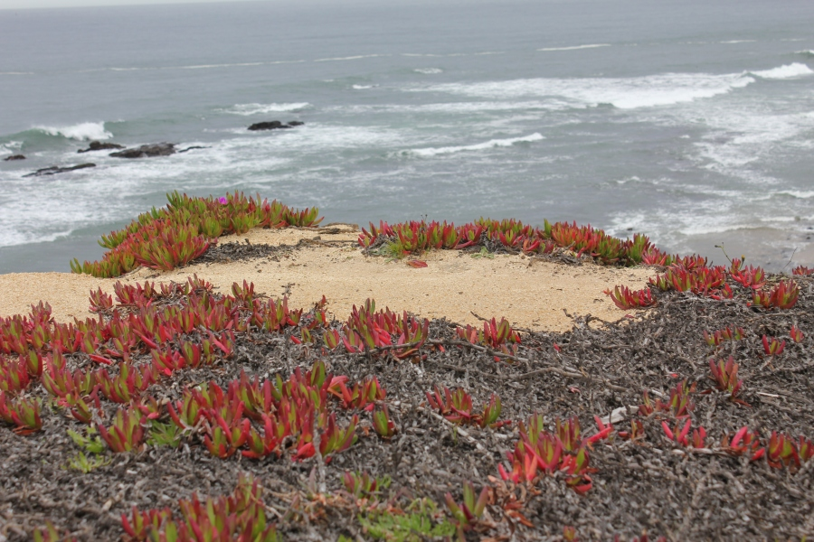 Succulents on cliff