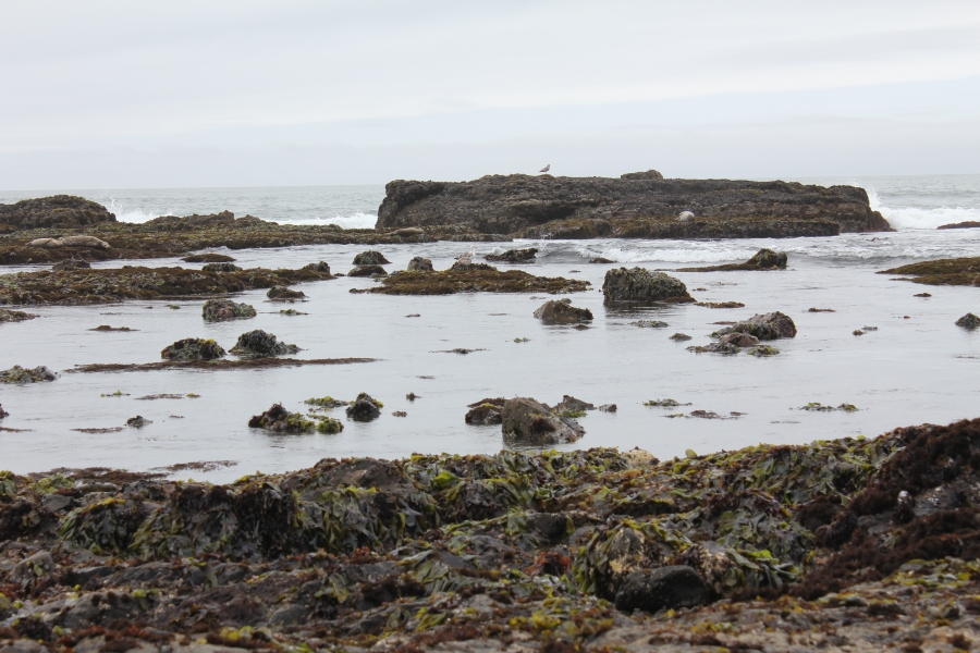 Seals and tide pools