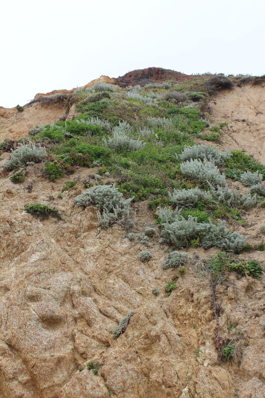 Plants growing on the side of the cliff